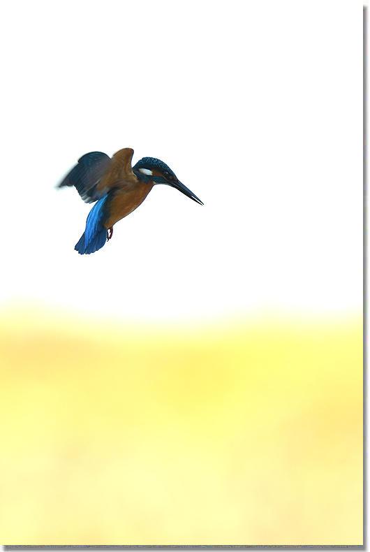 1214_10.jpg
